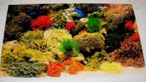 Scenic 2-Sided Plastic Aquarium Poster Backing