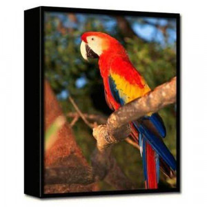 Trends International Macaw 3-D Printed Frame